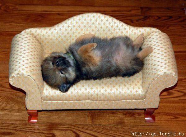 My Comfy Bed