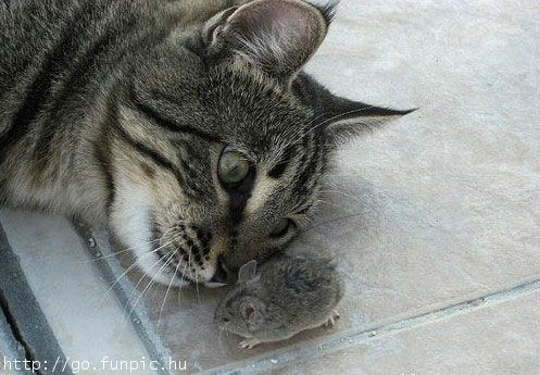 Playing Cat & Mouse