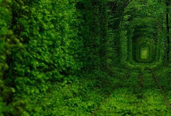 top-10-tree-tunnel-008