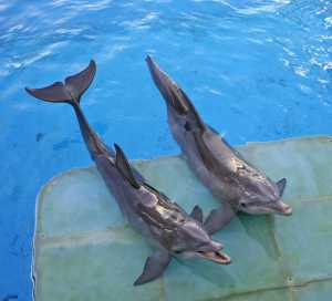 2 porpoises