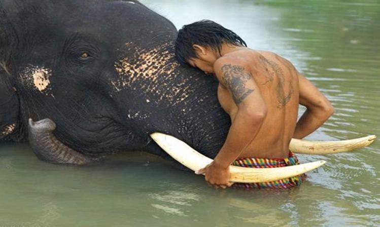 man elephant