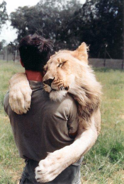 5qi6a-lion-hug