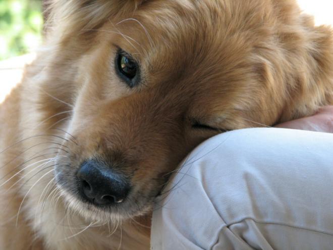 dogs_love