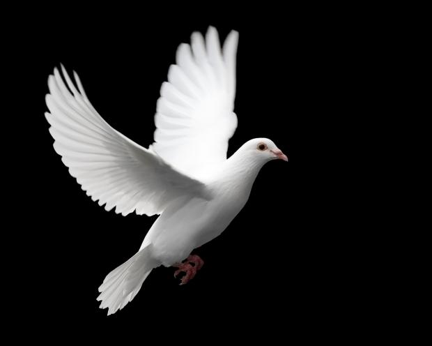 dove_large
