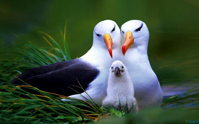 birds-family