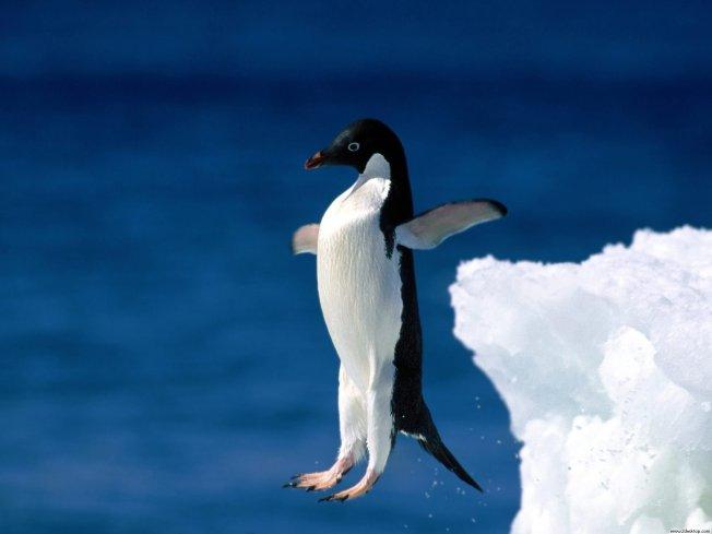 leap of faith penguin normal