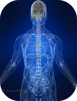 body+energy-systems