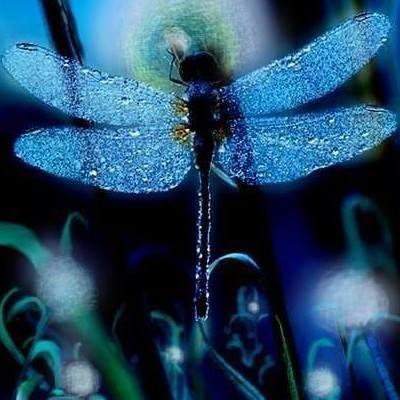 dragonfly6