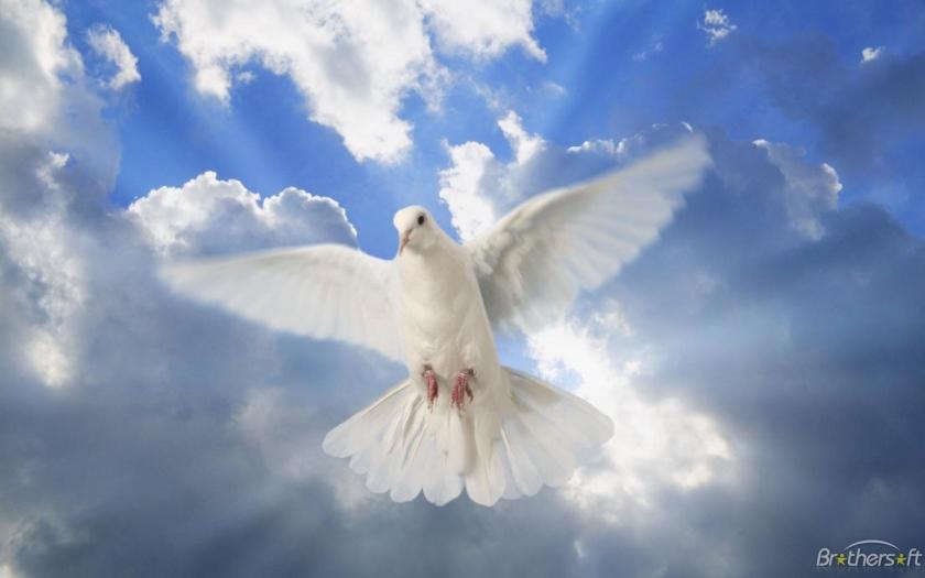 DOVE OF [PEACE