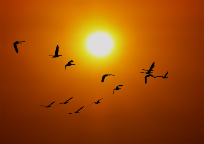 canada-geese-sunset-patrick-parenteau