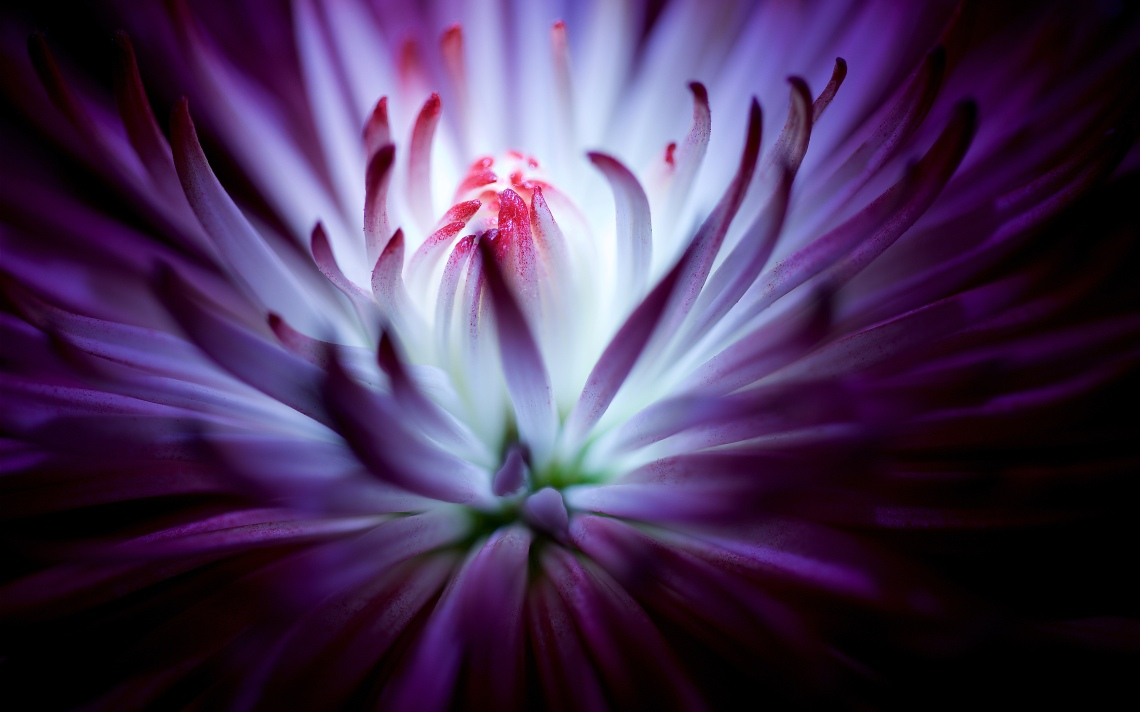 purple_flower
