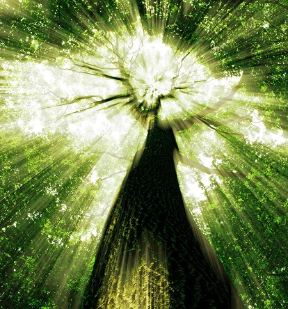 matrix-tree.jpg
