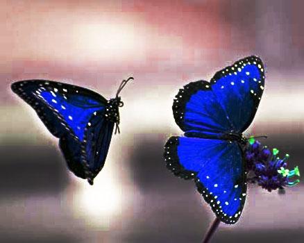 Butterflies Photo #54