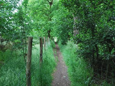 Wimbleton Trail