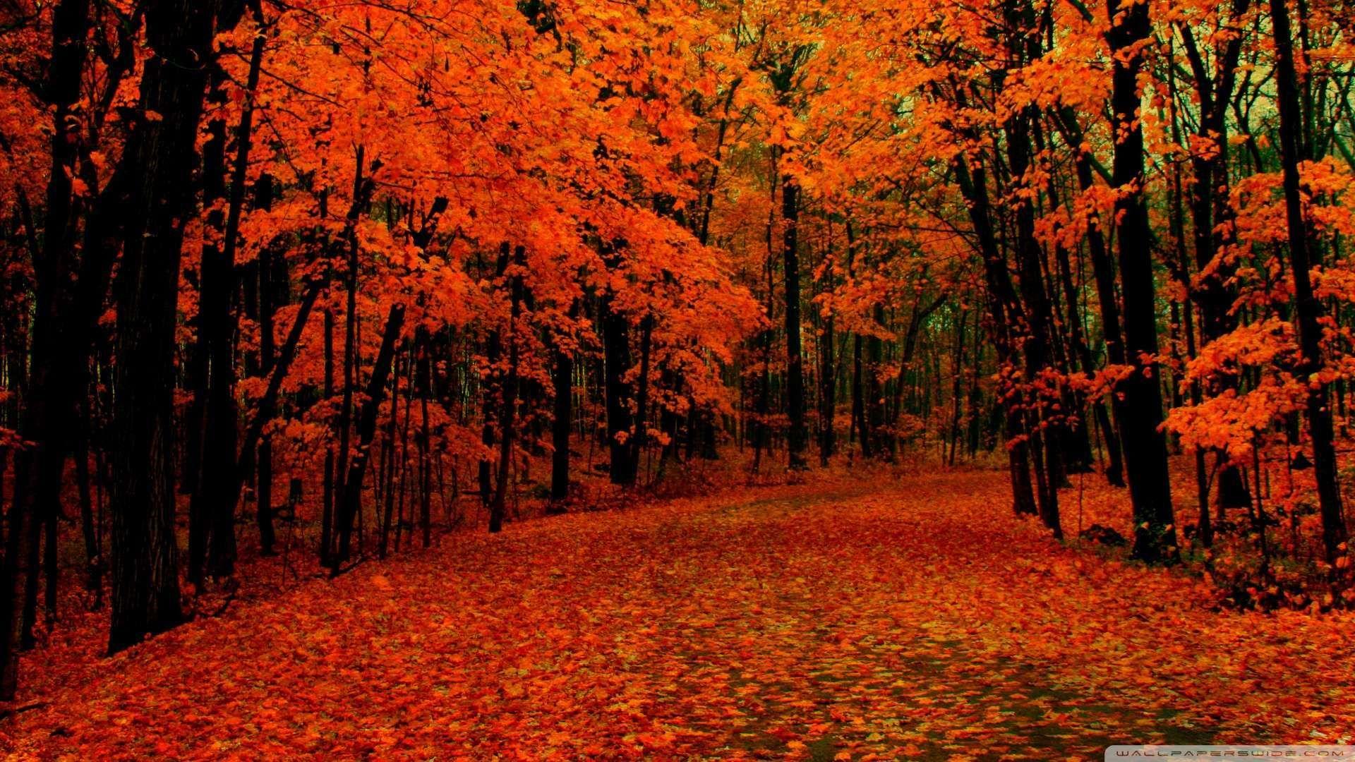 Autumn oct
