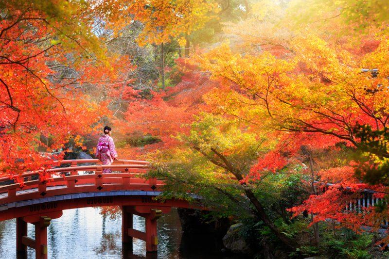 autumn-in-japan-brifge-hyoto-800x534