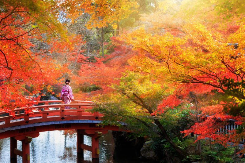 autumn-in-japan-brifge-hyoto-800x534